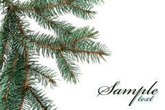 Christmas fir tree Stock Photography