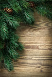 Christmas fir tree Stock Image