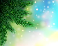 Christmas fir tree background. Royalty Free Stock Image
