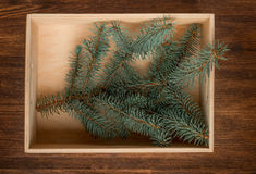 Christmas fir tree in box on wooden background Stock Photos