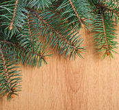 Christmas fir-tree branch Stock Image