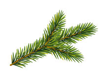 Christmas  fir tree branch Stock Images