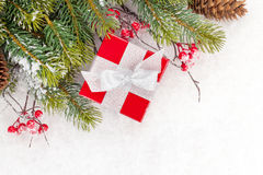 Christmas fir tree branch with holly berry and gift box Royalty Free Stock Image
