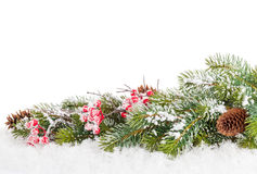 Christmas fir tree branch with holly berry Stock Image