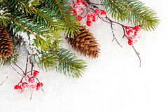Christmas fir tree branch with holly berry Stock Images