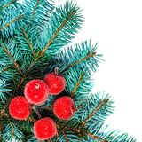 Christmas Fir tree branch with red decorations isolated on white Royalty Free Stock Photos