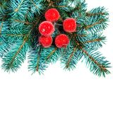 Christmas Fir tree branch with red decorations isolated on white Stock Photos