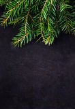 Christmas Fir Tree Branch on Vintage Blackboard Royalty Free Stock Image