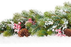Free Christmas Fir Tree Branch With Holly Berry Royalty Free Stock Image - 47342926