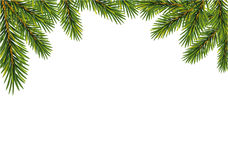 Christmas  fir tree branches Stock Photography