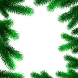 Christmas fir tree branches Royalty Free Stock Photos