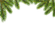 Christmas  fir tree branches,. Vector illustration isolated on white background Royalty Free Stock Photos