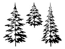 Christmas fir tree, contours. Christmas fir trees, symbolical pictogram, black contours isolated on white background Royalty Free Stock Images
