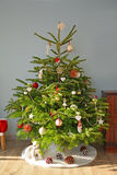 Christmas fir. Christmas Tree in the European style stock photography