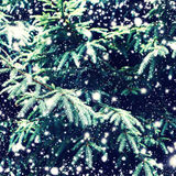 Christmas fir tree with falling snow as background and Christmas Royalty Free Stock Photos