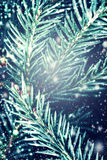 Christmas fir tree with Falling Snow - Winter background . Card Stock Photos