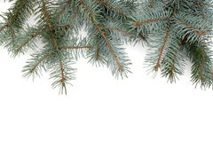 The Christmas fir-tree, is isolated on white stock photos