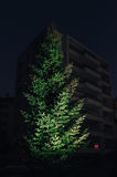 Christmas fir tree with lights and Apartment building background Royalty Free Stock Image