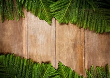 Christmas fir tree on old wooden for background Stock Image