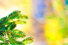 Christmas fir tree on pastel background Royalty Free Stock Photo