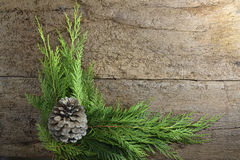 Christmas fir tree with pinecone background Royalty Free Stock Images