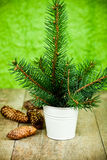 Christmas fir tree and pinecones Royalty Free Stock Images