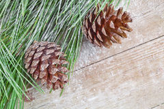 Christmas fir tree with pinecones Stock Images