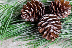 Christmas fir tree with pinecones Stock Photos