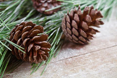 Christmas fir tree with pinecones Royalty Free Stock Photos