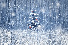 Christmas fir tree with red Christmas decorations in the winter snowy forest. Blue toning. Christmas image stock photos