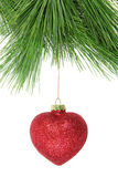 Christmas fir tree and red glitter bauble Stock Photography