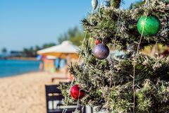 Christmas fir tree on sandy beach. New year celebration.  Royalty Free Stock Image