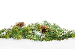 Christmas fir tree with snow Stock Photos