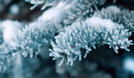 Christmas fir-tree. Winter frost on spruce tree  close-up .Shallow depth-of-field Royalty Free Stock Photo