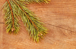 Christmas fir tree on a wooden background. Christmas fir tree on a wooden table Stock Photo