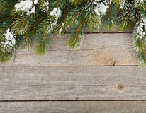 Christmas fir tree on wooden board background Royalty Free Stock Image