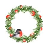 Christmas fir tree wreath with bird 6. Watercolor illustration. Christmas fir tree wreath with bird Stock Photography
