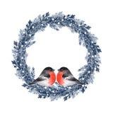 Christmas fir tree wreath with birds. Watercolor illustration. Christmas fir tree wreath with birds Stock Photo
