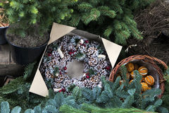 Christmas fir tree wreath Royalty Free Stock Image