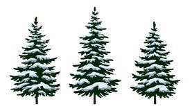 Christmas Fir Trees Royalty Free Stock Photography