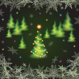 Christmas fir trees. Stock Images
