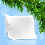 Christmas fir twigs with white paper scroll. On a blue background Royalty Free Stock Images