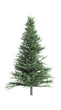 Christmas fir. On white background Stock Image