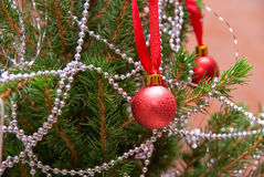 Christmas firtree Stock Images