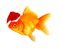 Christmas fish Royalty Free Stock Photos