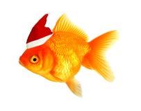 Christmas fish Stock Photos