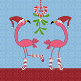 Christmas Flamingos Stock Photos