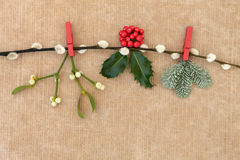 Christmas Flora Royalty Free Stock Photography