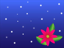Christmas_flower. Poinsettia flower on a blue background with snowflakes Stock Photos