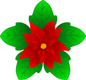 Christmas Flower Stock Photo